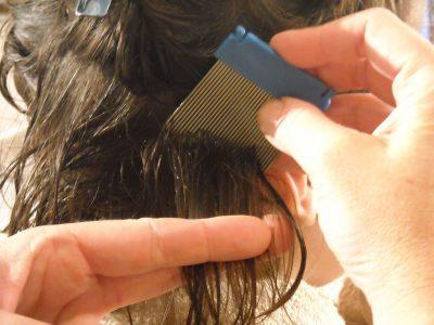Вши в волосах как избавиться