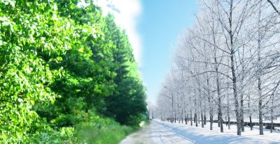 Как защитить летом, зимой?